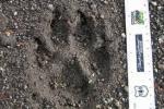OR 7 footprint