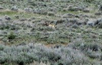 OR 7 in Modoc County, CA 2012