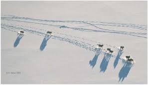 Photo from Haber's website, alaskawolves.org