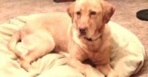 Bronco was killed in a conibear trap in Minnesota
