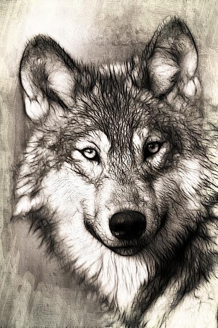 wolf-221568_640