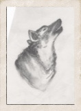 sketch-of-howling-wolf-in-frame