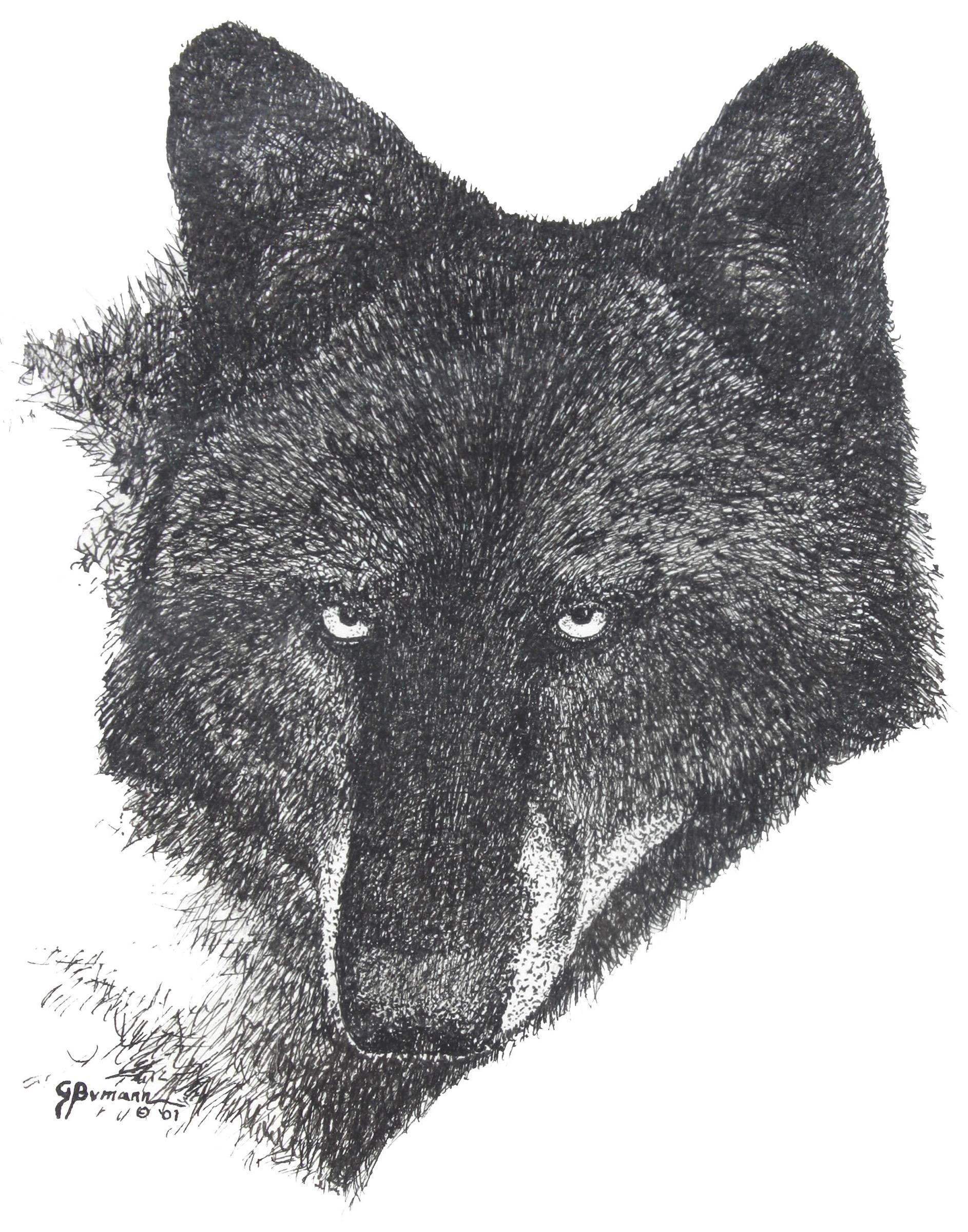 george-black-wolf-face-sketch