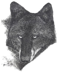 george-black-wolf-face-sketch
