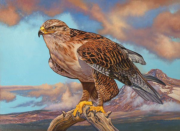ferruginous-Hawk_final_scan_600