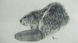 GB beaver 1